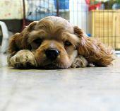 a puppy falling asleep poster