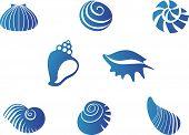 Set of blue seashells isolated on white poster