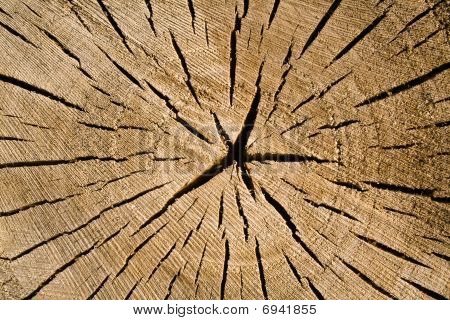 Cut Of Tree As Texture