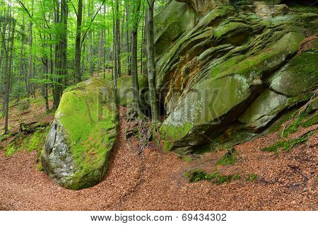 Summer landscape with fairy forest. Green moss on stones and trees with beautiful roots. Carpathians, Ukraine, Europe