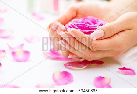 Manicure and Hands Spa. Beautiful Woman hands closeup. Manicured nails and Soft skin. Beauty hands with rose flower petals. Beauty treatment. Beautiful woman's nails with beautiful french manicure