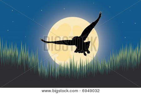 Owl night hunter