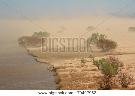 Severe sand storm with windblown trees on the edge of a lake, South Africa