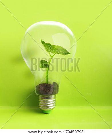 Green plant in soil inside light bulb on green background. Eco concept.