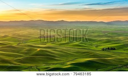 Beautiful Landscape Of Crop Field In Palouse In The Morning
