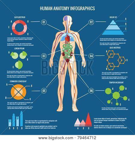 Human Body Anatomy Infographic Design