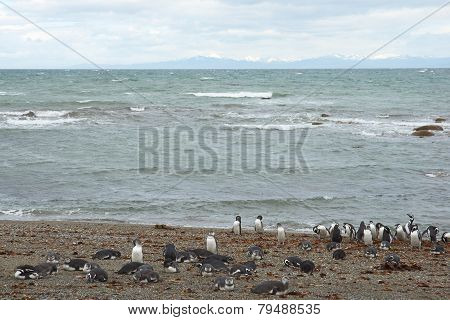 Penguin Colony at Punta Arenas