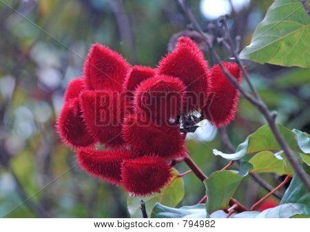 rare tree flowers