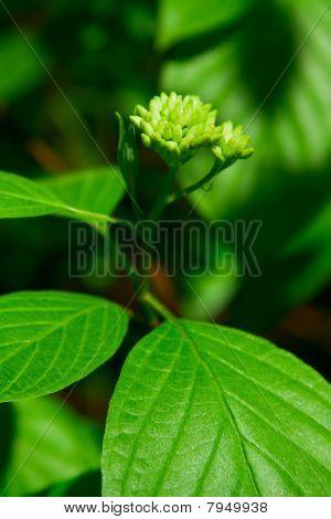 Green Plant/foliage