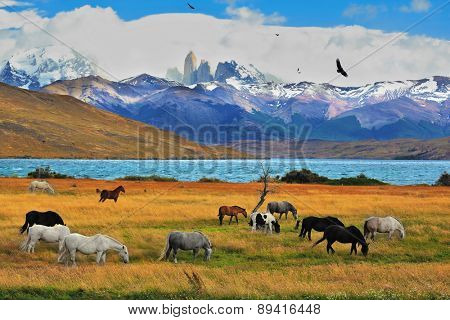 Lake Laguna Azul in the mountains. On the shore of Laguna Azul grazing horses. Magical landscape in the national park Torres del Paine, Chile
