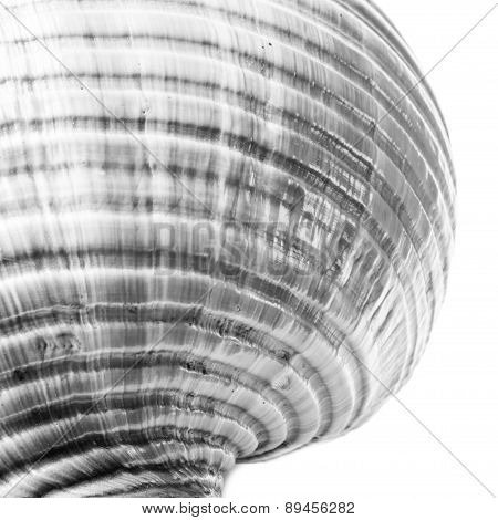 Abstract View Of A Conch