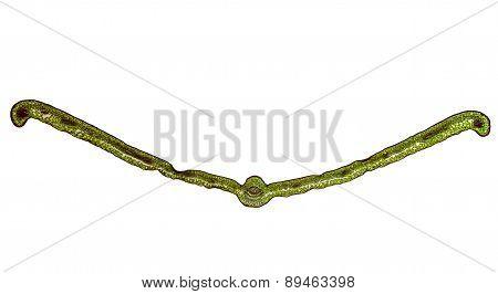 Retro Look Leaf Micrograph