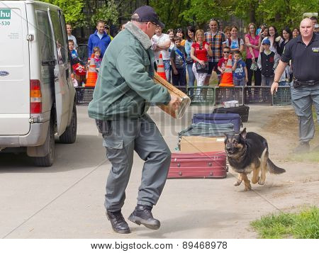 Working Dog Show