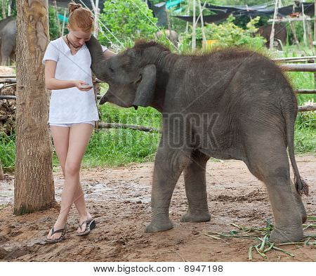 Teenager with baby elephant delightful young animal of three month poster