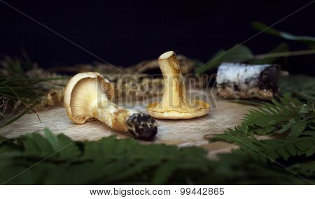 chanterelle mushrooms and grass  on the wooden background