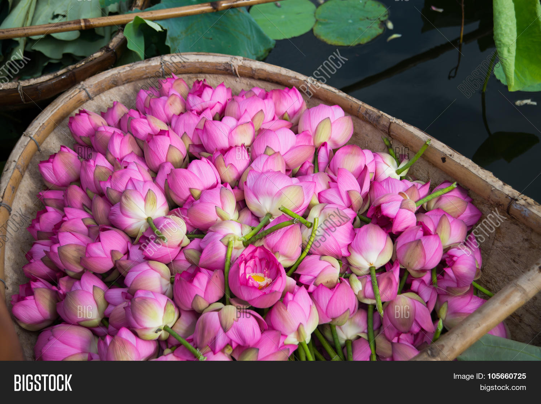 Boat Lotus Flower West Image Photo Free Trial Bigstock