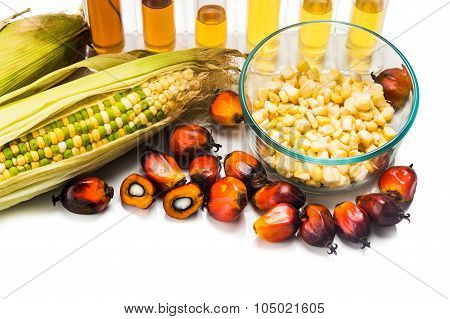 Corn And Oil Palm Generated Ethanol In Test Tubes, With Biofuel On Maize