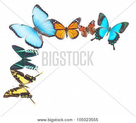 Tropical butterflies border