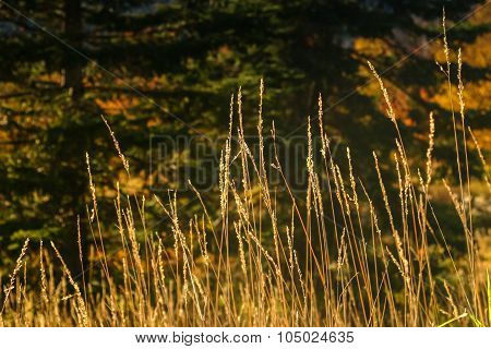 Autumn Grasses in Afternoon Light 2
