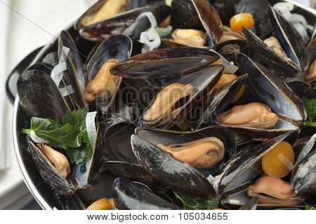 Pan with fresh cooked mussels close up