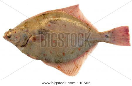 Fish Plaice