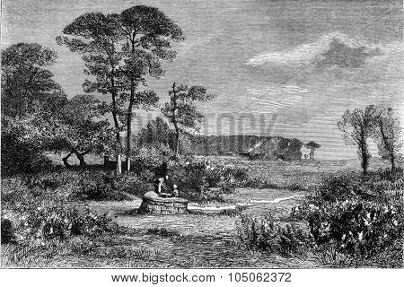 1876 Exhibition of Painting, Gorse in bloom, by Alexandre Sege, vintage engraved illustration. Magasin Pittoresque 1877.