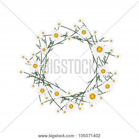 Beautiful White Daisy Wreath on White Background