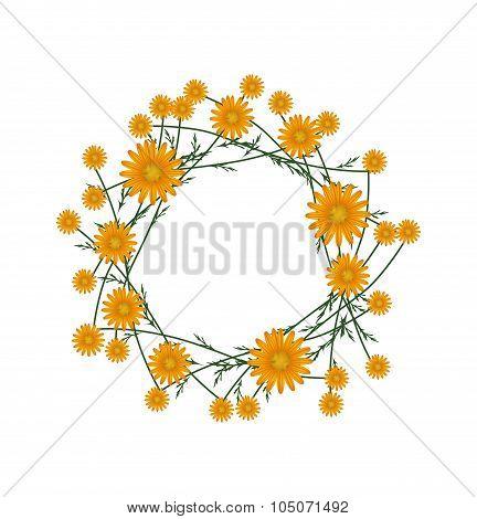 Beautiful Orange Daisy Wreath on White Background