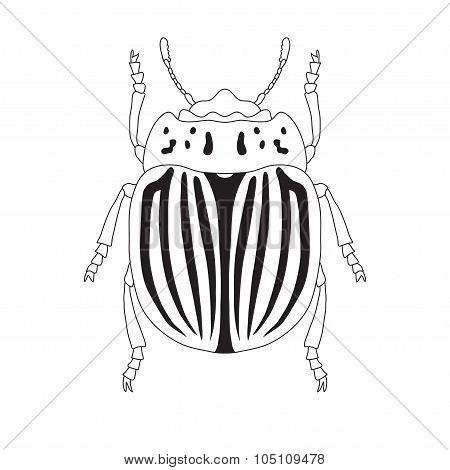 colorado potato beetle. Leptinotarsa decemlineata. Sketch of colorado potato beetle.  colorado  beet