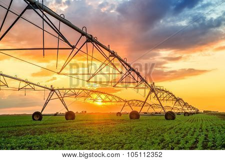 Automated farming irrigation sprinklers system on cultivated agricultural landscape field in sunset poster