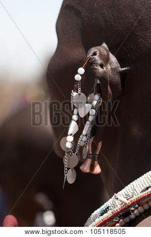 Masai woman with ear jewels