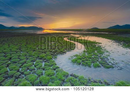 Small water way over green grass cracked land