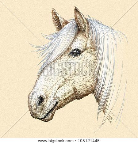 engrave horse illustration