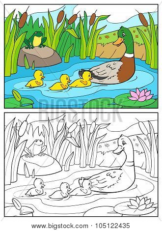 Coloring Book. Mother Duck And Ducklings With Frog.