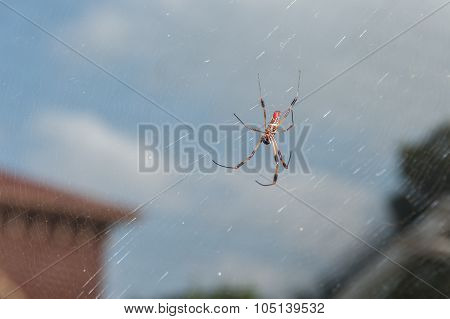 Large spiders of the city