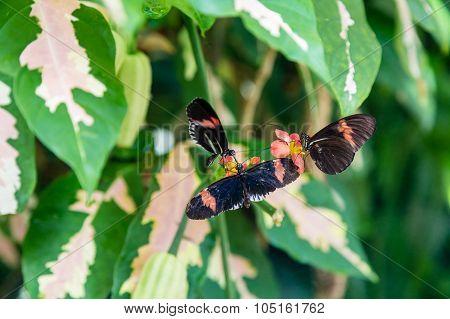 Three Butterflies On Flowers