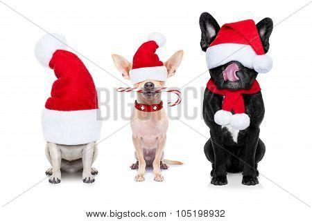 Row Of Santa Claus Dogs