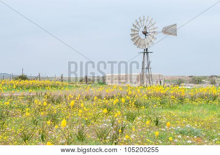 Yellow Kastert And Windmill With Dam