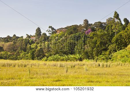 Ondiri Swamp In Kikuyu, Kenya
