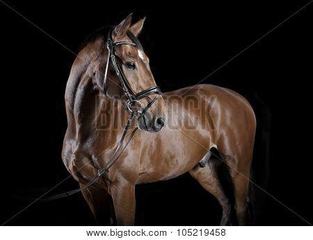 Hungarian Horse Studio