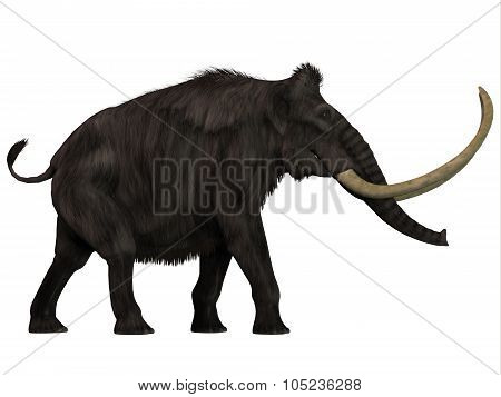 The Woolly Mammoth was a herbivore that lived during the Pleistocene Period of Eurasia and North America. poster