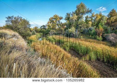 old river channel, swamp and riparian forest along the Cache la Poudre River in eastern Colorado, fall scenery poster