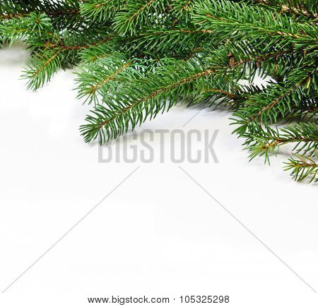 christmas evergreen pine tree branches over white