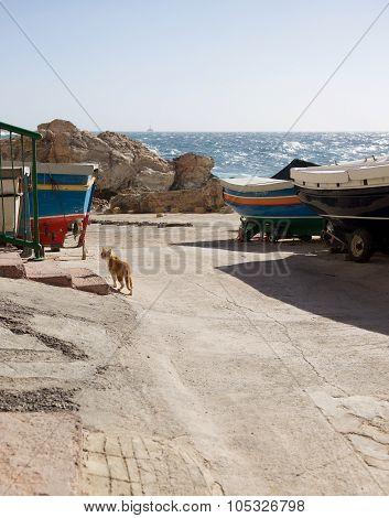 Wild cat near the Lapsi, Malta