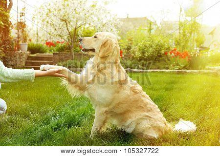 Dog paw and human hand doing a handshake, outdoors