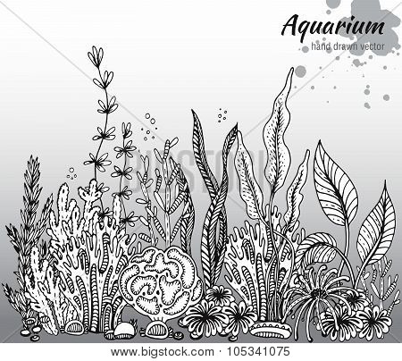 Vector Monochrome Hand Drawn Illustration With Aquarium Algae, Corals