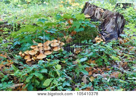 tree stump with mushrooms and moss