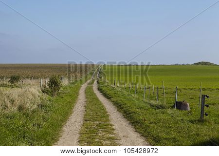 Amrum (germany) - Road Way Into Landscape