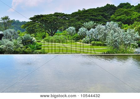 A pond with lush greenery at the background