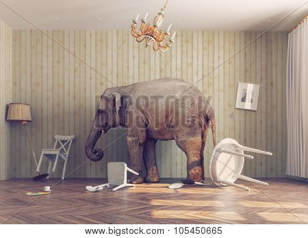 a elephant calm in a room. photo combination concept poster